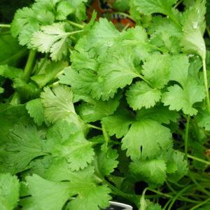 Herbs / Hierbas Aromaticas