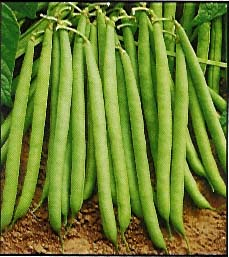 Vegetable Seeds / Hortalizas