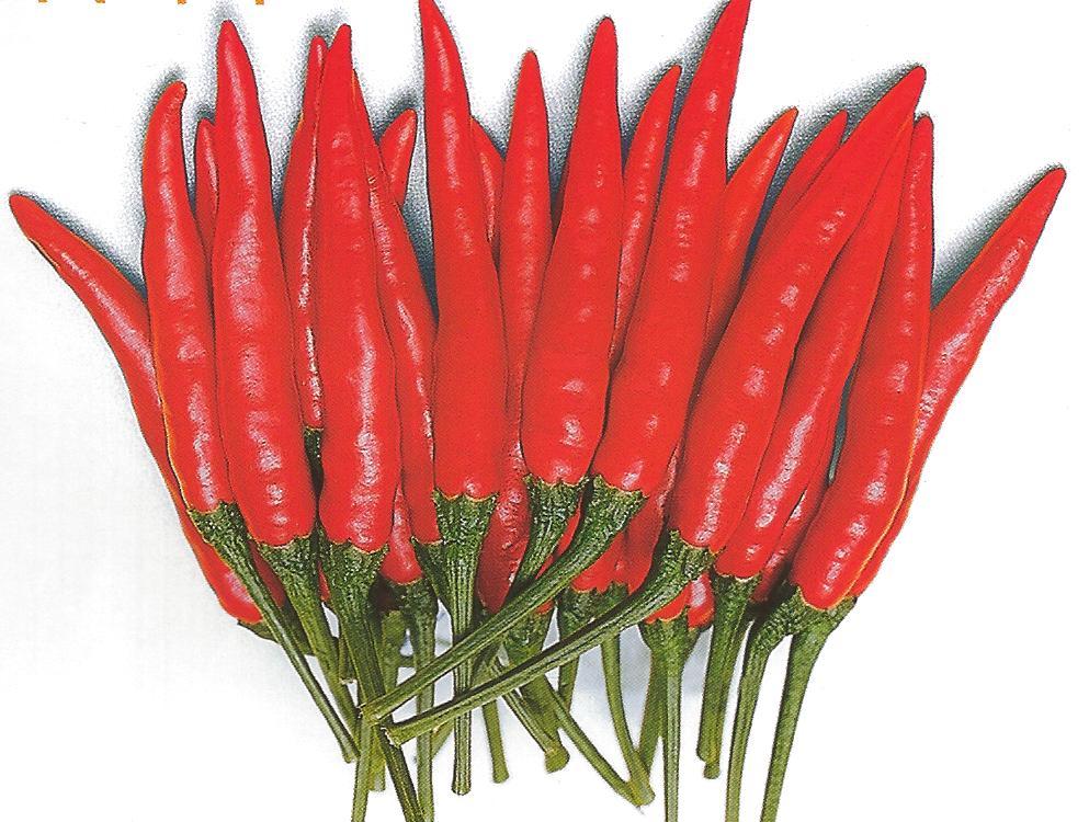 Thai chili DEMON f1 | Corona Seeds, Inc